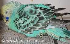 Recognize a sick bird - Health and diseases - Birds Online