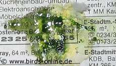 Kot Als Krankheitsindikator Vogelgesundheit Birds Online