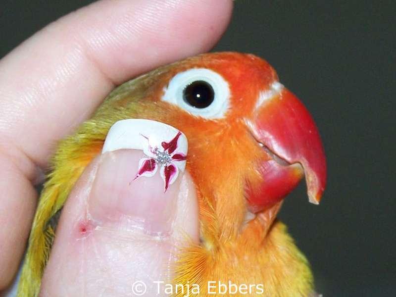dass die vögel der sorge