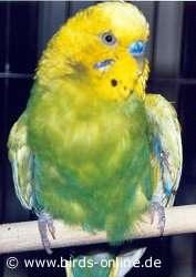 flügel gebrochen vogel