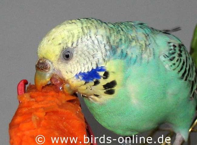 weich vogelfutter kaufen